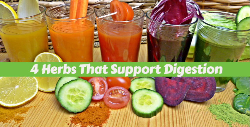 What Herbs to Use to Help My Digestive System